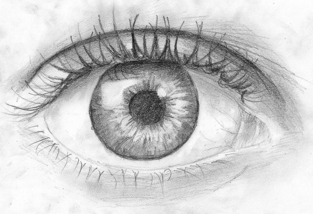 The beginners can refer the drawing lessons to learn easily
